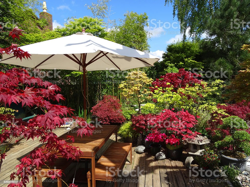Image of garden decking with wooden table, cream parasol, maples stock photo