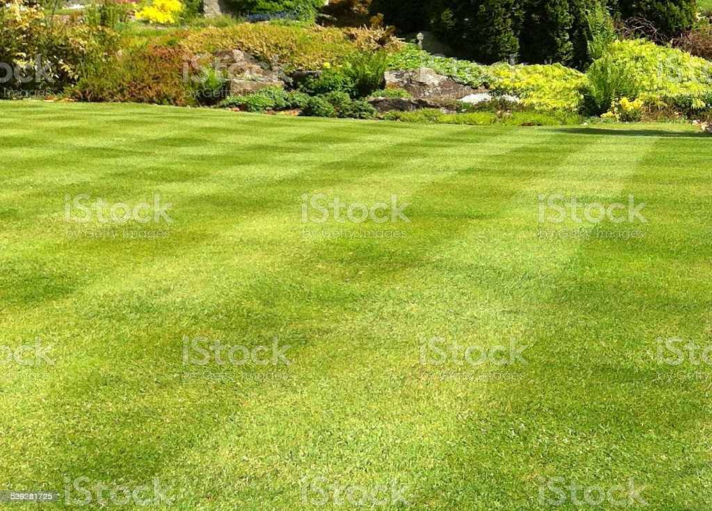 Image of garden lawn stripes, green grass turf, weed-and-feed fertiliser stock photo