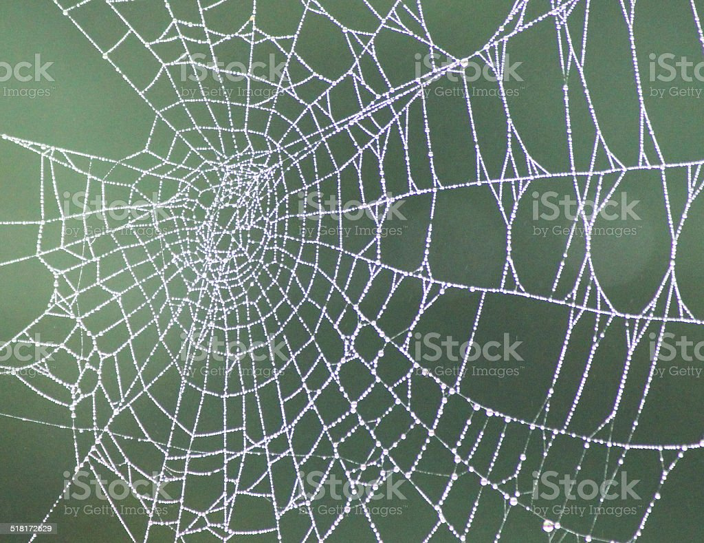 Image of garden spider's web with morning dew drops, garden-background stock photo