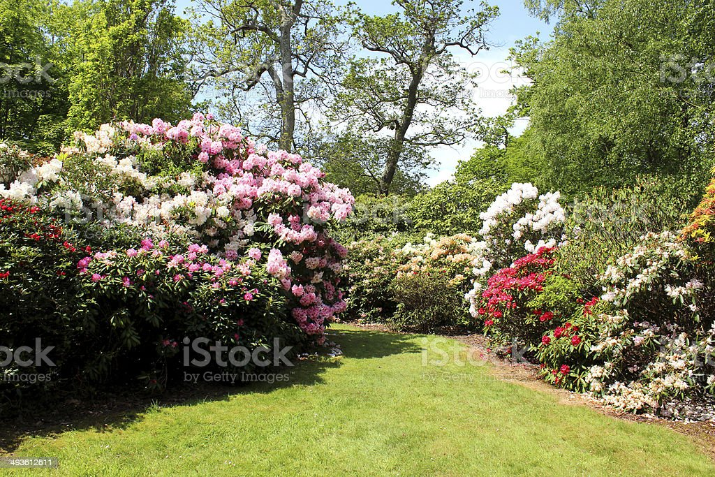 Image of garden with flowers, shrubs, trees, lawn and pathway stock photo