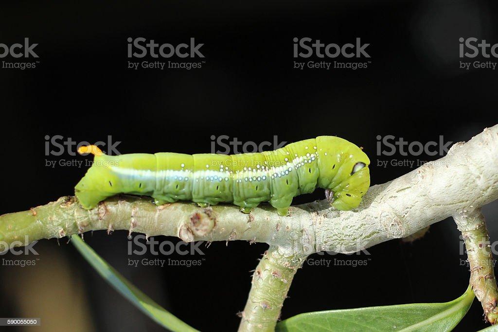 Image of green caterpillar. stock photo