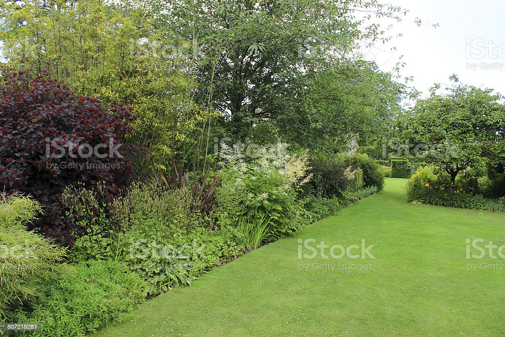 Image of green garden lawn, shrubs, herbaceous border flowers, smoke-bush royalty-free stock photo
