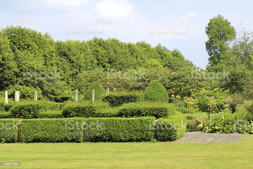 Image of green lawn with fine grass, yew hedge topiary stock photo