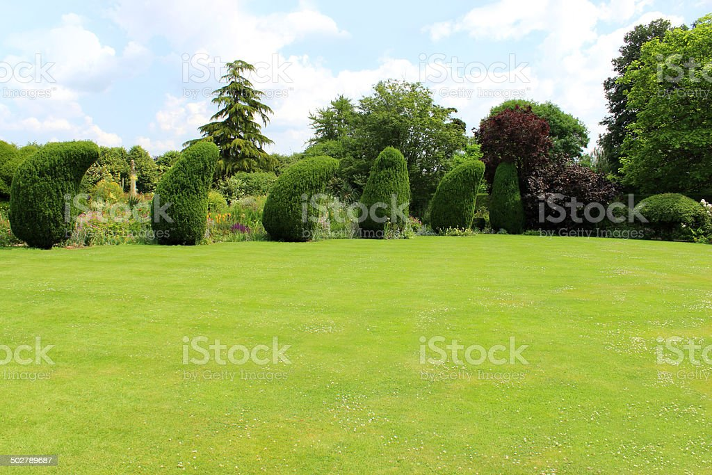 Image of green lawn with stripes, clipped topiary yew trees stock photo