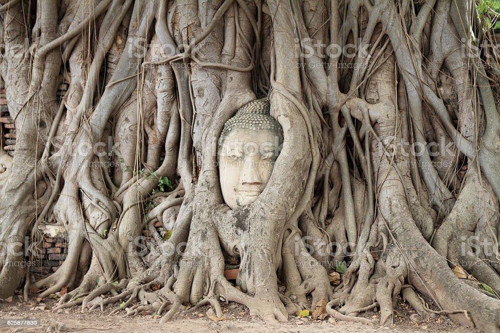 Image of head of Buddha at Wat Mahathat in Ayutthaya stock photo