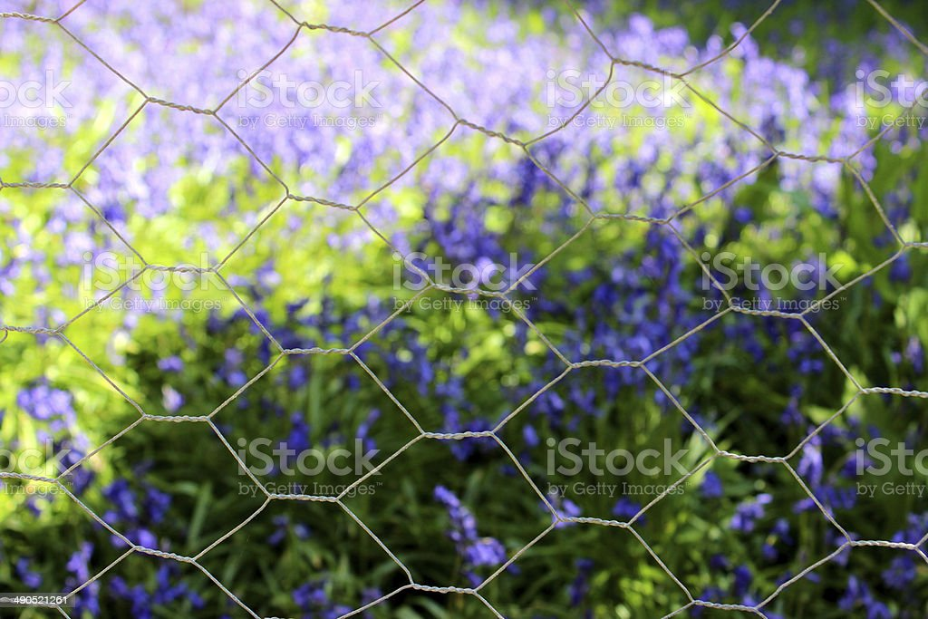 Image of hexagonal chicken wire, with a background of bluebells stock photo