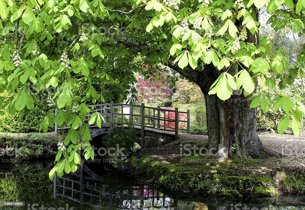 Image of horse chestnut (conker tree) by ornamental Japanese bridge stock photo