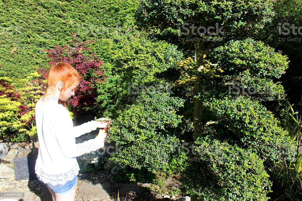 Image of Japanese garden cloud tree branches being clipped / pruned stock photo
