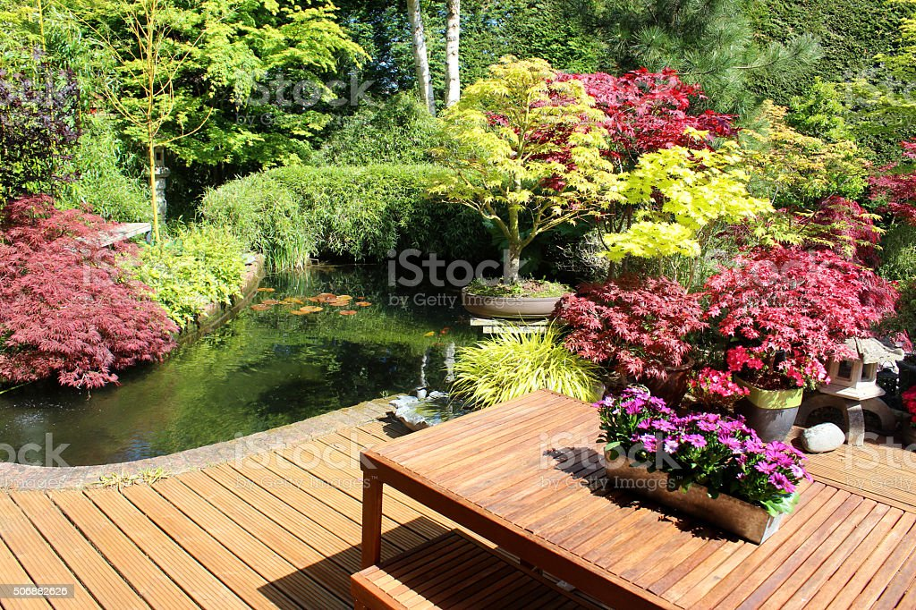 Image of Japanese garden, koi pond, maple bonsai trees, decking stock photo