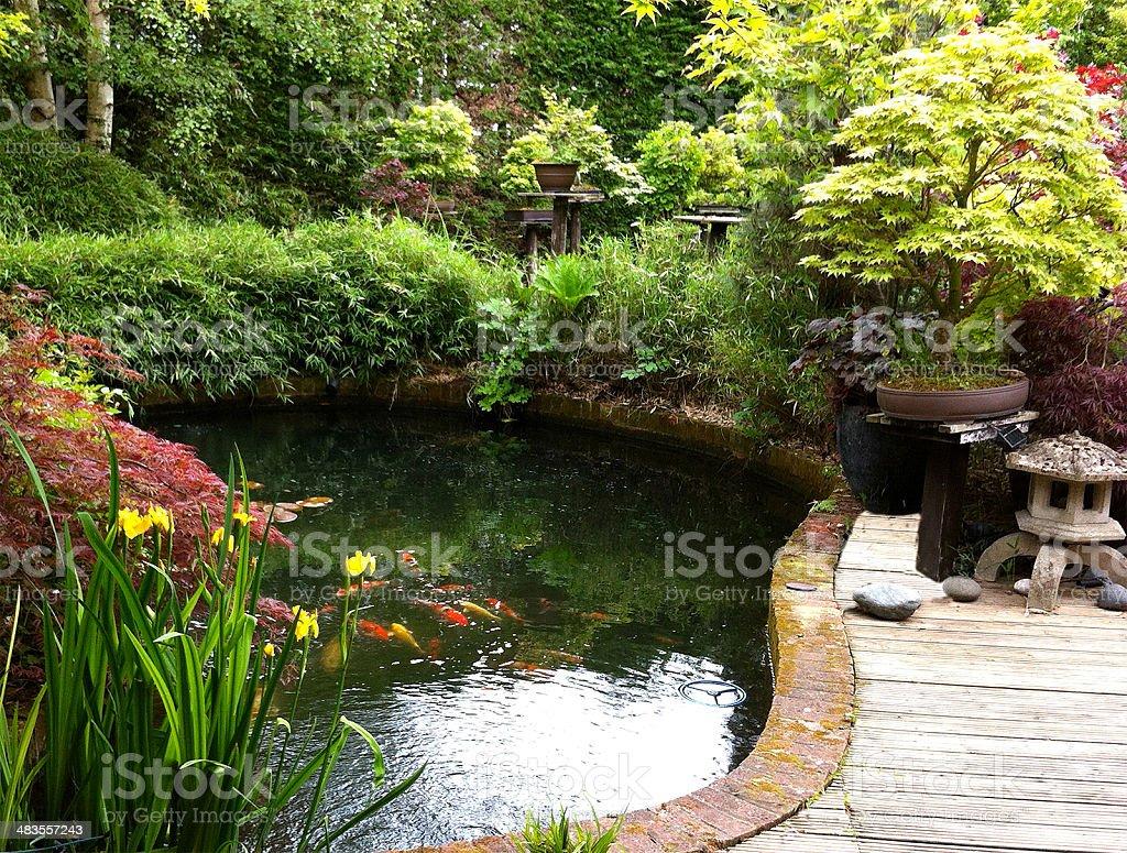 imagen del jardn japons con estanque con peces koi bamb maples bonsi foto