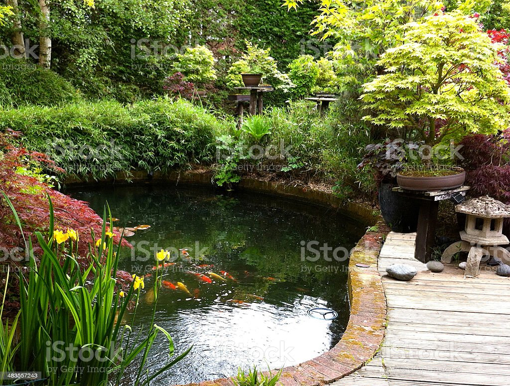 Image of Japanese garden with koi pond, bamboo, maples, bonsai stock photo