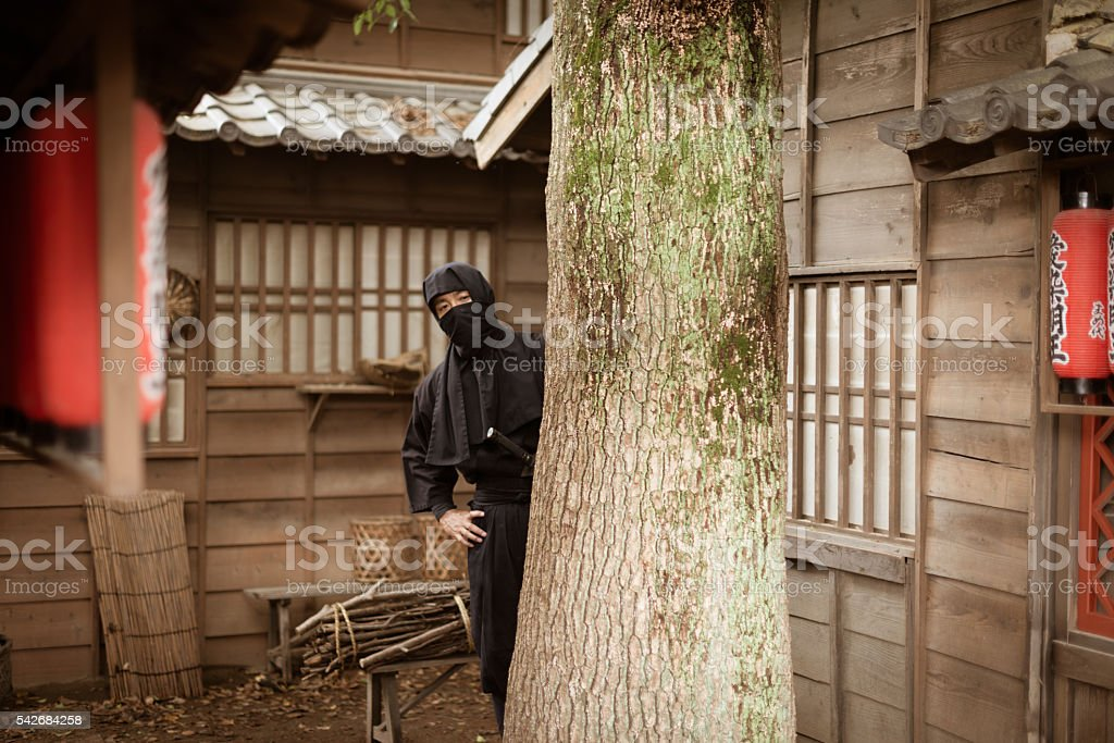 Image of Japanese ninja hiding behind the tree stock photo