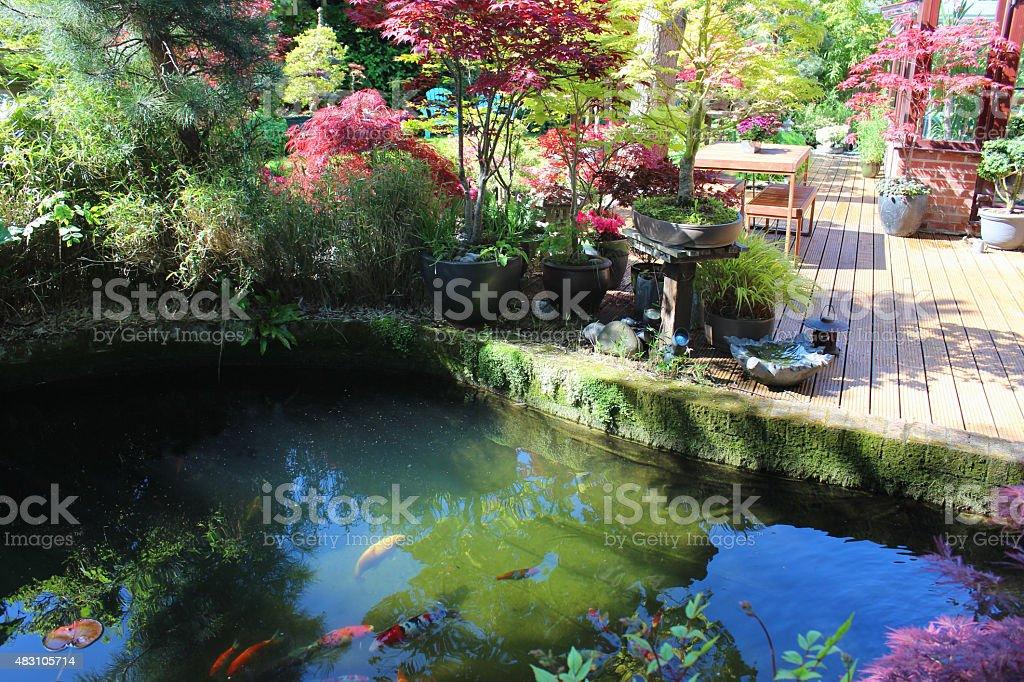 Image of large garden pond with koi carp fish, brick-edging stock photo