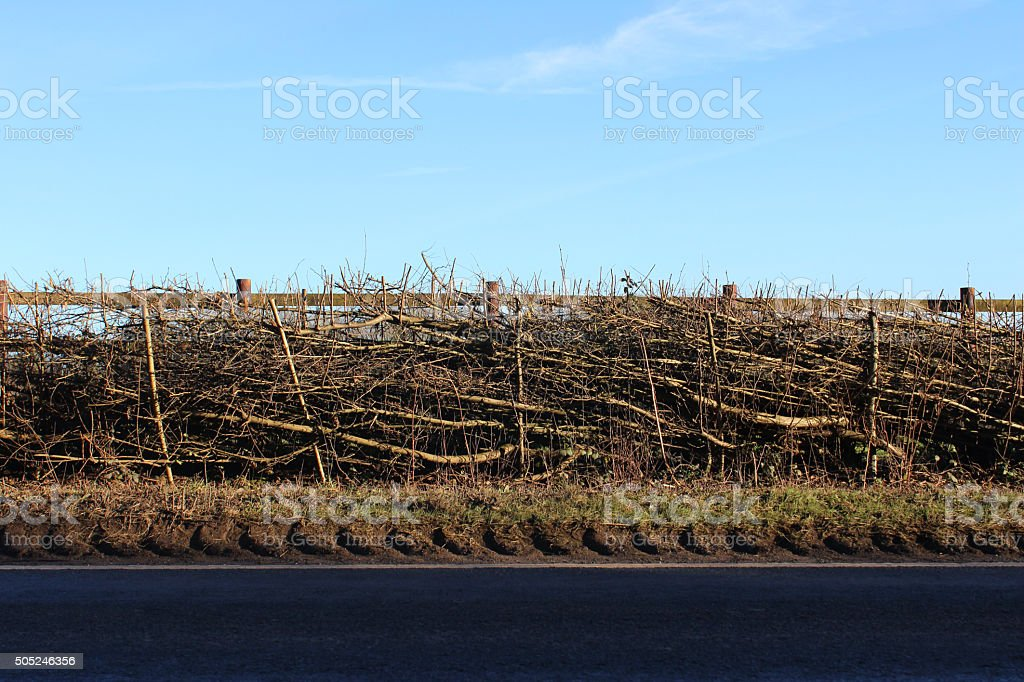 Image of layered farm-hedge by roadside, tyre-tracks on muddy road-verge stock photo