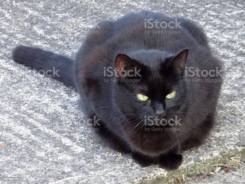 Image of lazy black cat lying on concrete drive, looking-forwards stock photo