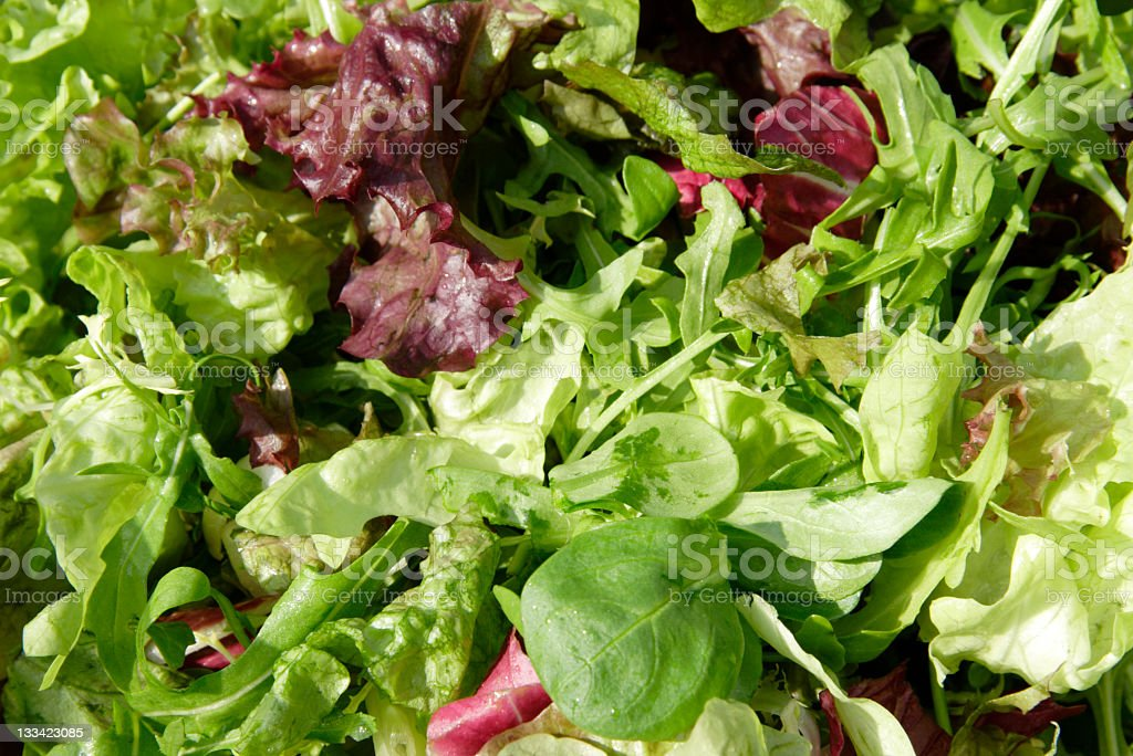 Image of Mixed fresh lettuce of different types stock photo