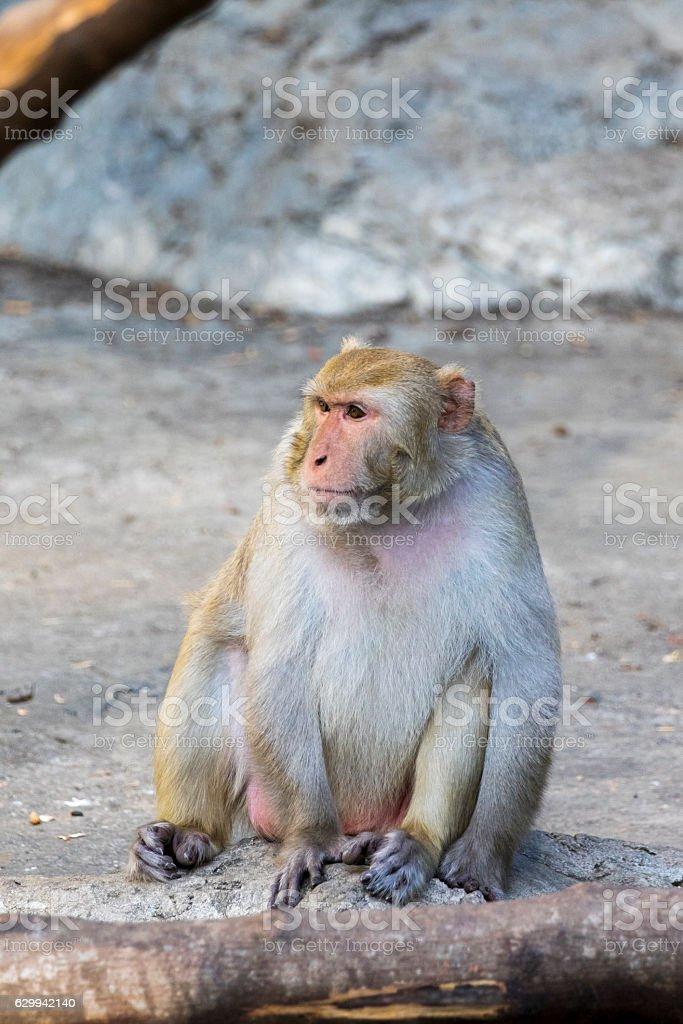 Image of monkey sitting on nature background. stock photo