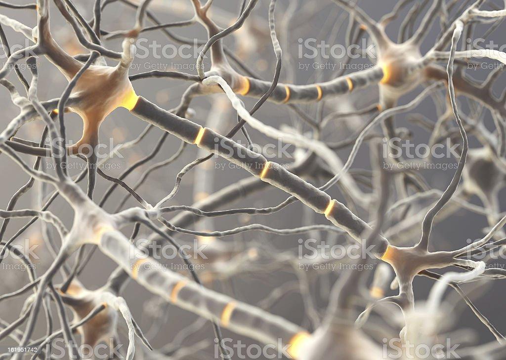 Image of multiple neurons functioning inside someone stock photo
