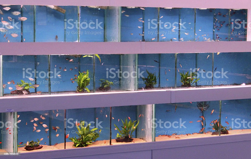 Image of multiple tropical fish tanks / aquariums with blue backgrounds stock photo