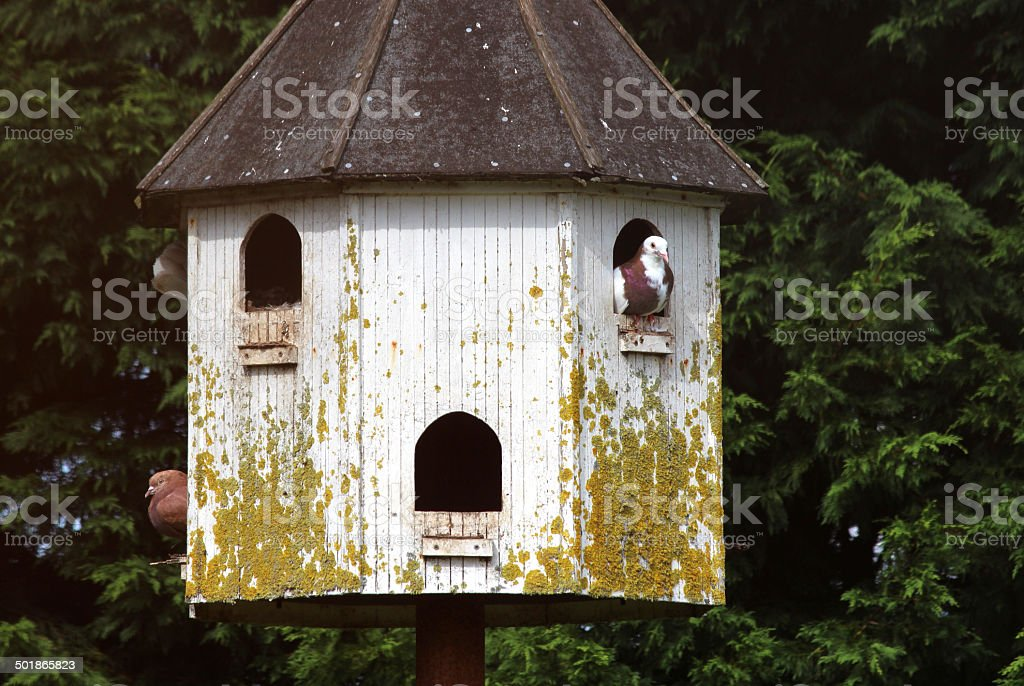 Image of old dovecote in garden, with pigeons looking out royalty-free stock photo