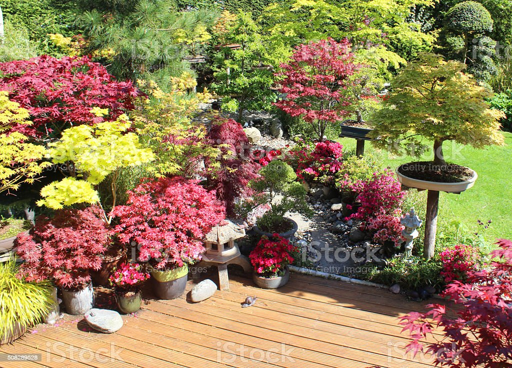 Image of oriental Zen garden, Japanese maples, stepping-stones, bonsai trees stock photo