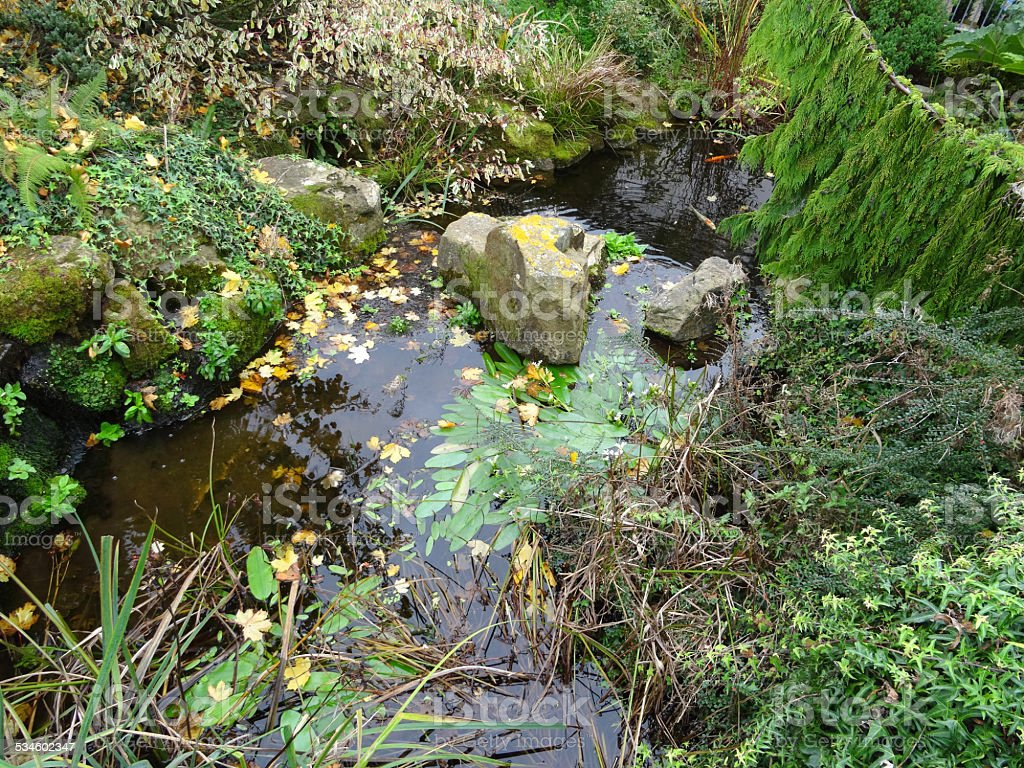 Image of overgrown garden pond / mossy rocks, autumn leaves, weeds stock photo