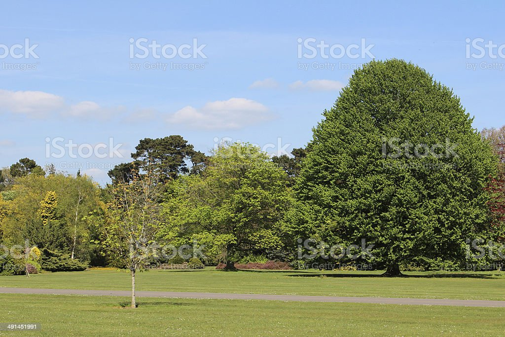 Image of park garden in summer, with lawn and trees stock photo