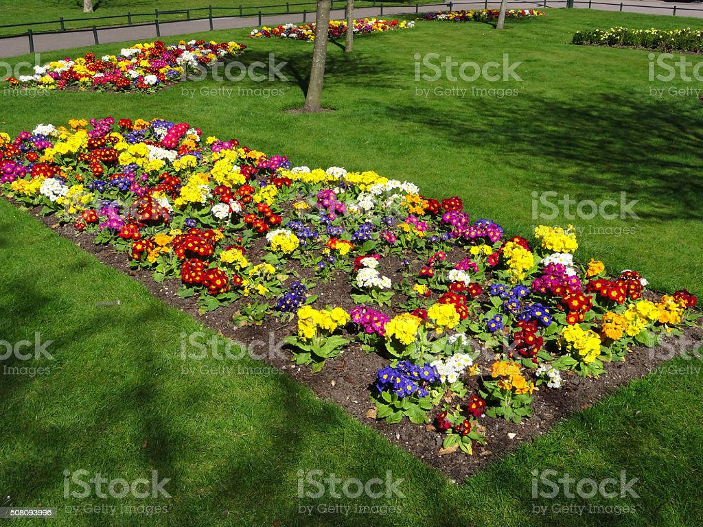 Image of park lawn with colourful spring-bedding primrose flowers (primulas) stock photo