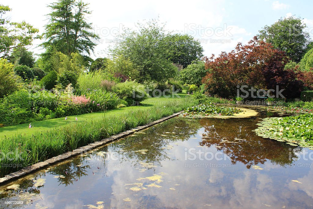 Image of pink water lilies, lily pond, ornamental water garden stock photo