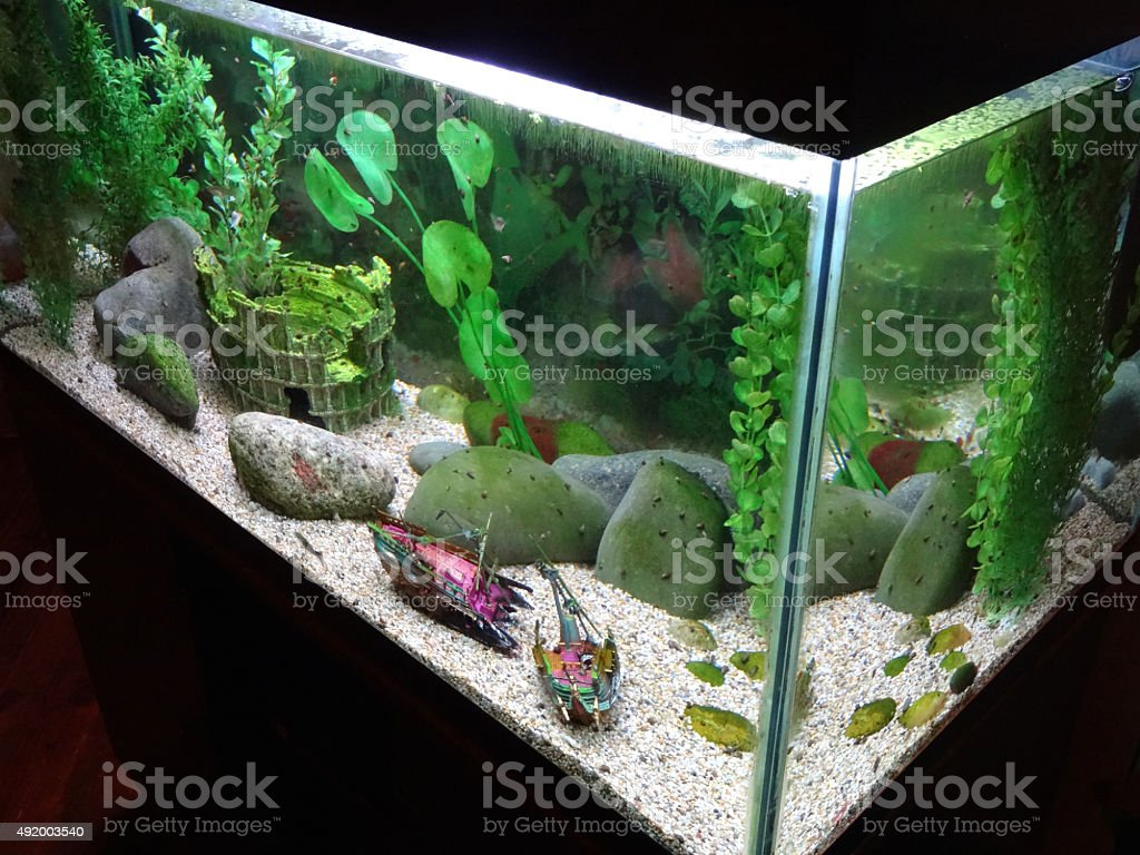 Image of planted fish tank with plastic aquarium plants, snails stock photo