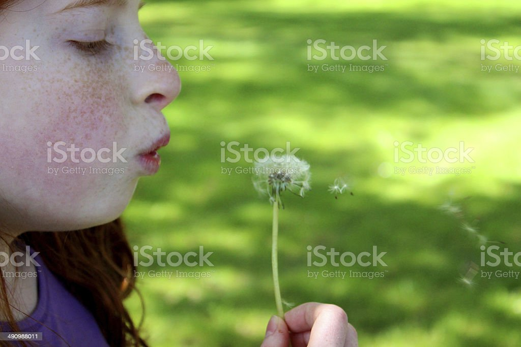Image of pretty girl blowing seeds from a ripe dandelion stock photo