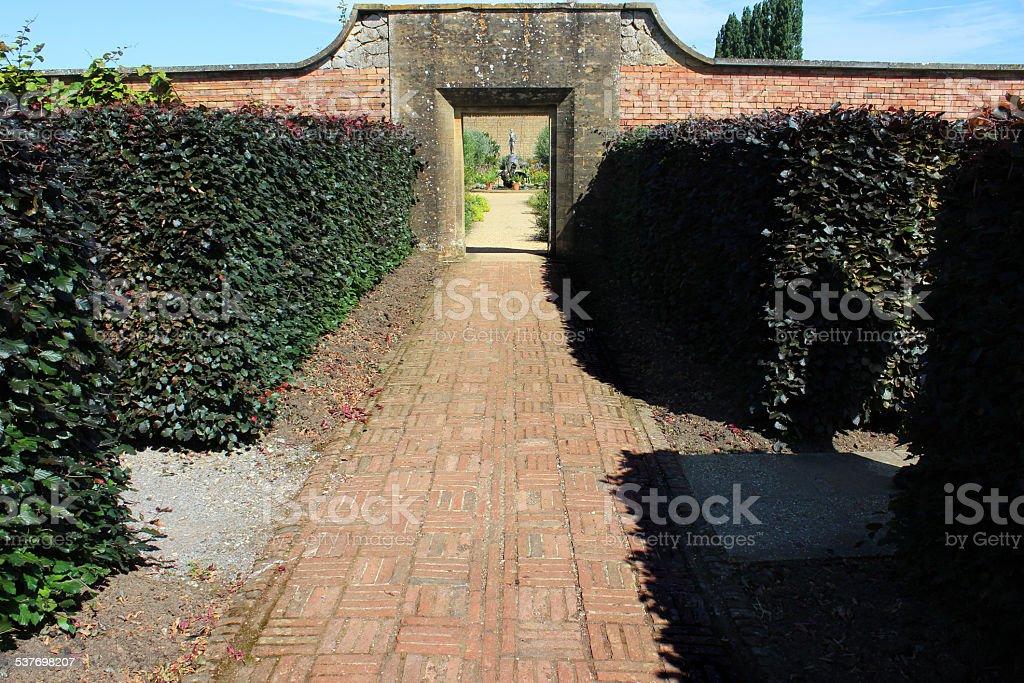 Image of pruned copper beech hedge (Fagus sylvatica 'Purpurea' / Atropurpurea) stock photo