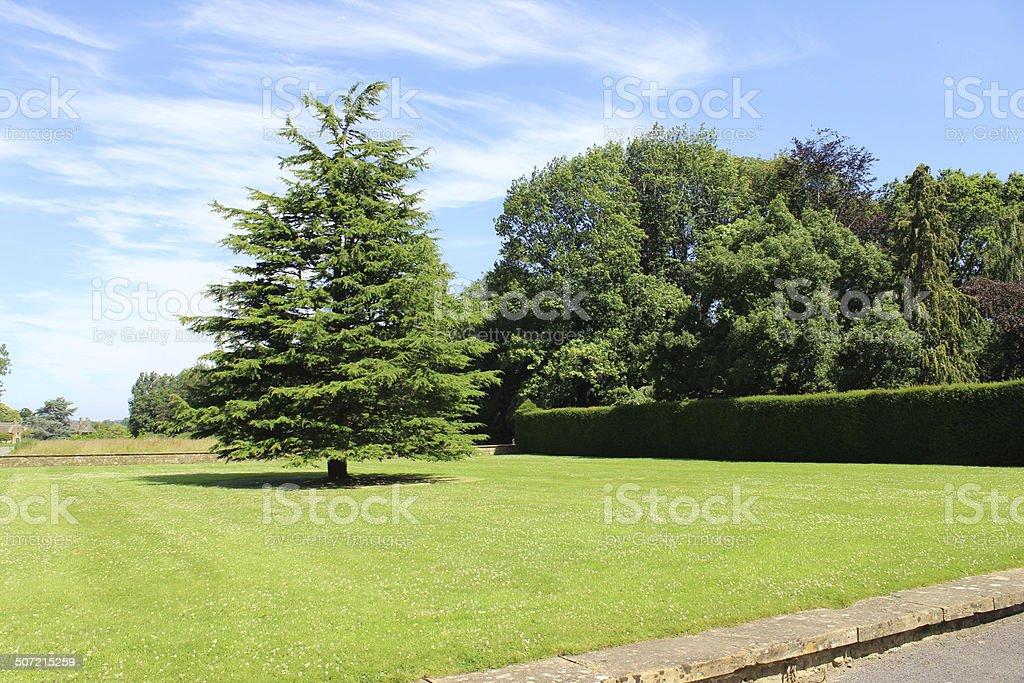 Image of raised garden lawn, deodar cedar tree (cedrus deodara) stock photo