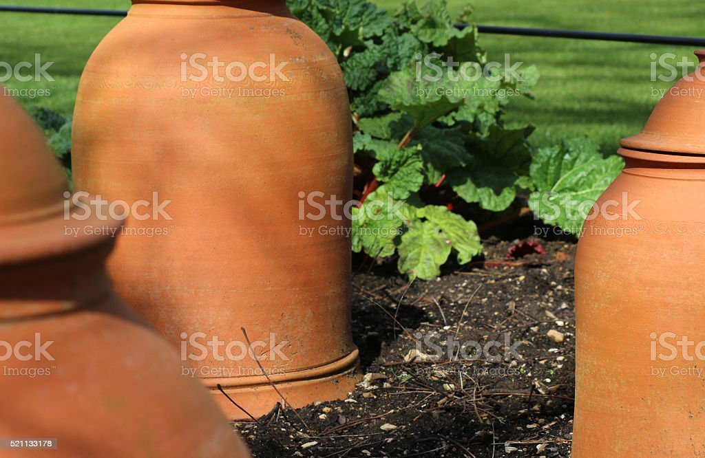 Image of rhubarb forcing pots made from terrcotta in vegetable-garden stock photo