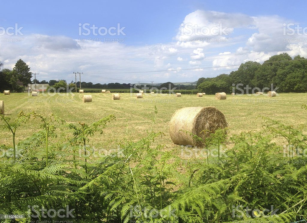 Image of round hay bales in green field on farm stock photo