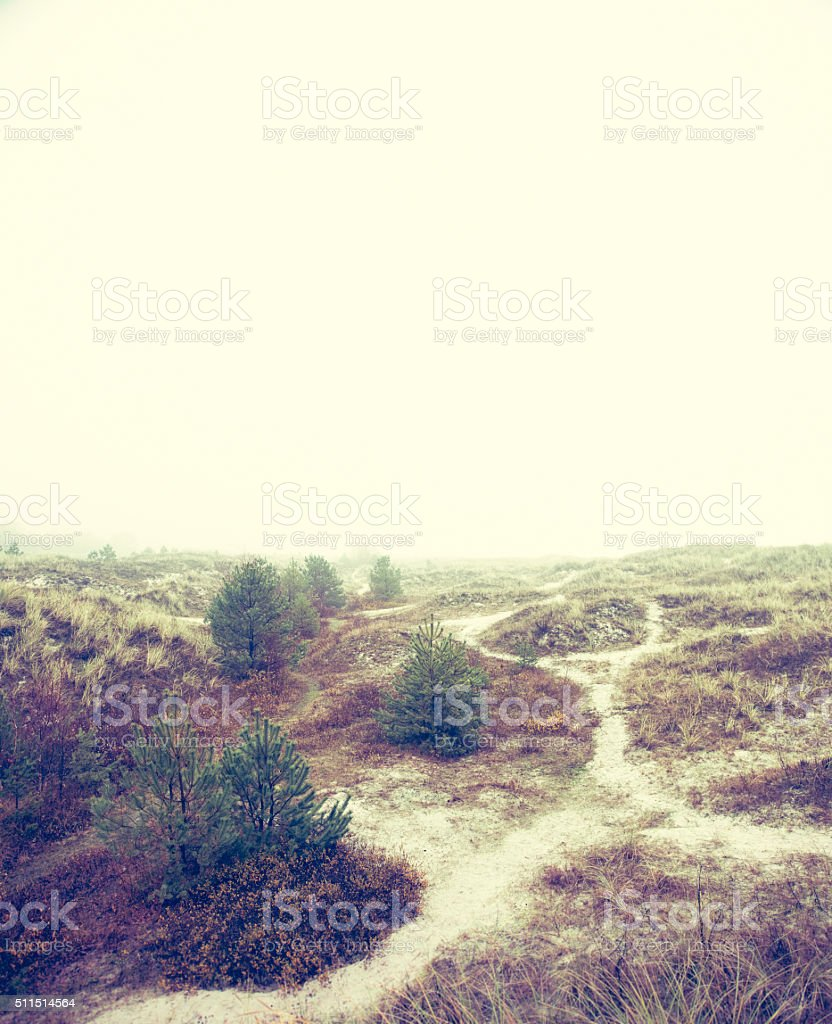 Image of sand dunes on the beach, no water (XXXLarge) stock photo