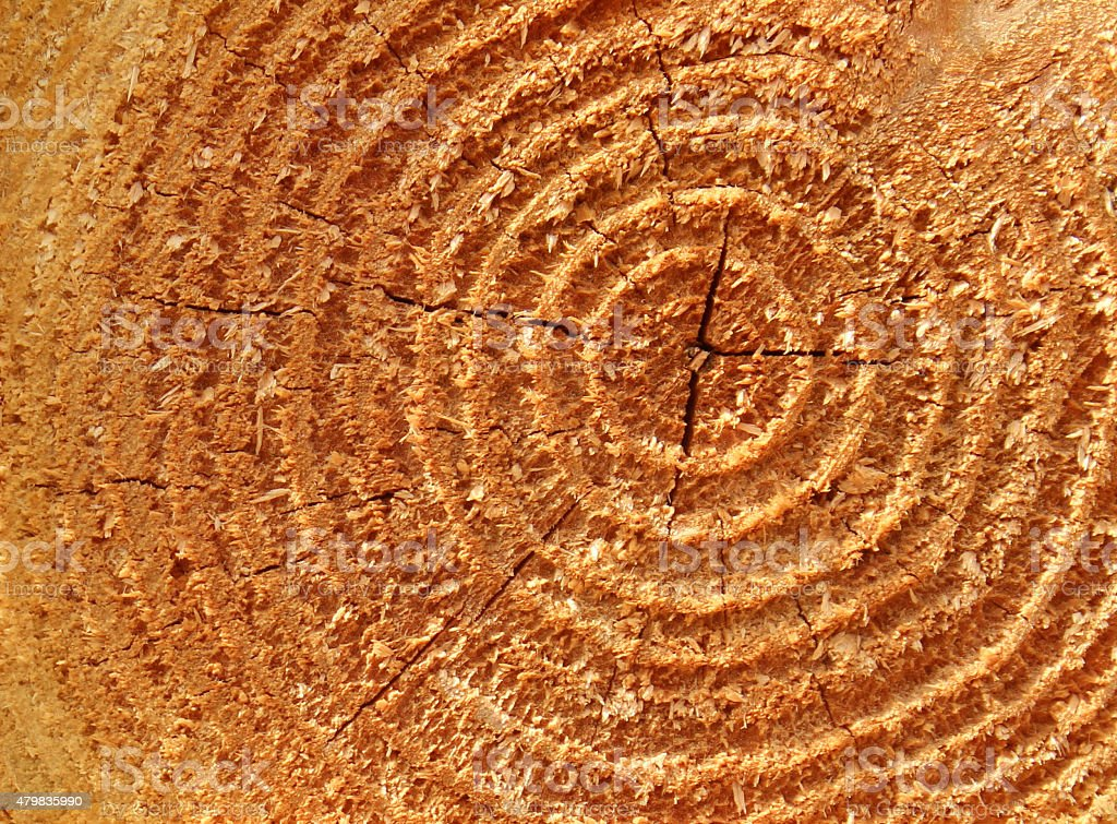 Image of sawn larch tree trunk rings background, timber fence-post stock photo