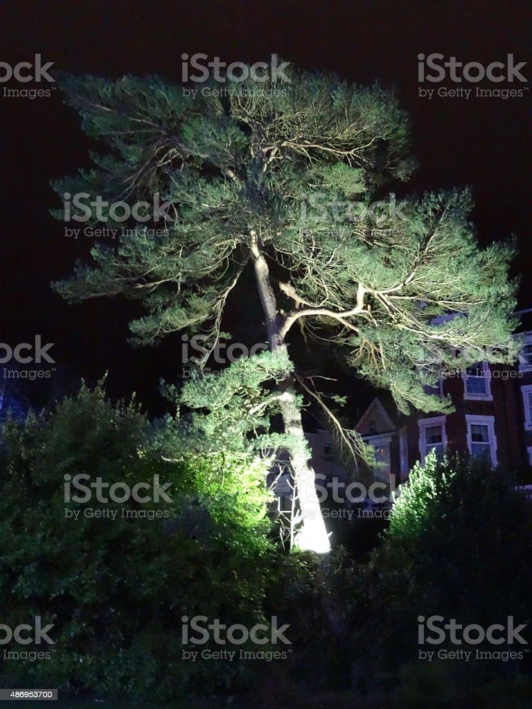 Image of Scots pine tree illuminated with garden spotlights / floodlight stock photo