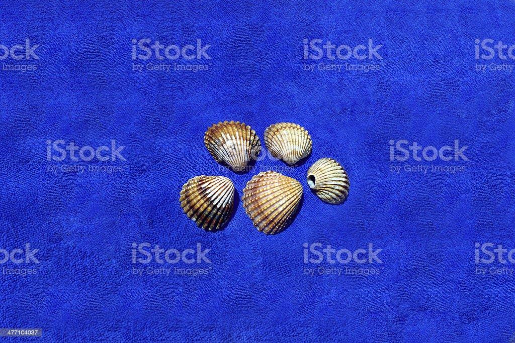 Image of seashells stock photo