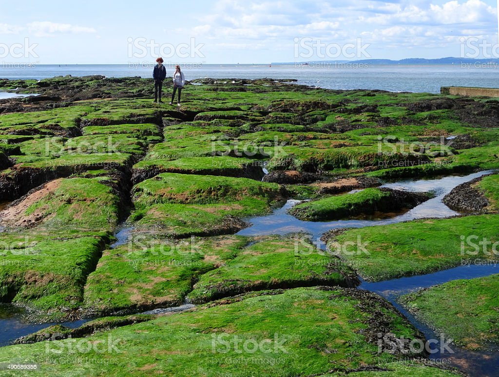 Image of seaweed covered rocks and rockpools at seaside beach stock photo