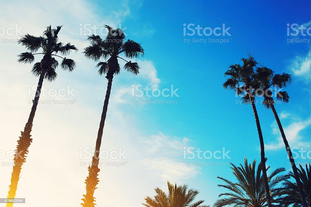 Image of silhouetted lush palm trees against dusky bright sky stock photo