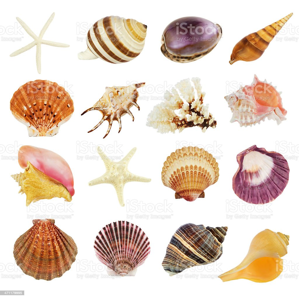 Image of sixteen different seashells on white background stock photo