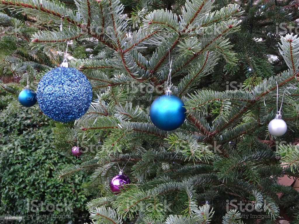 Image of spruce / Nordmann fir Christmas tree, blue baubles decorations stock photo