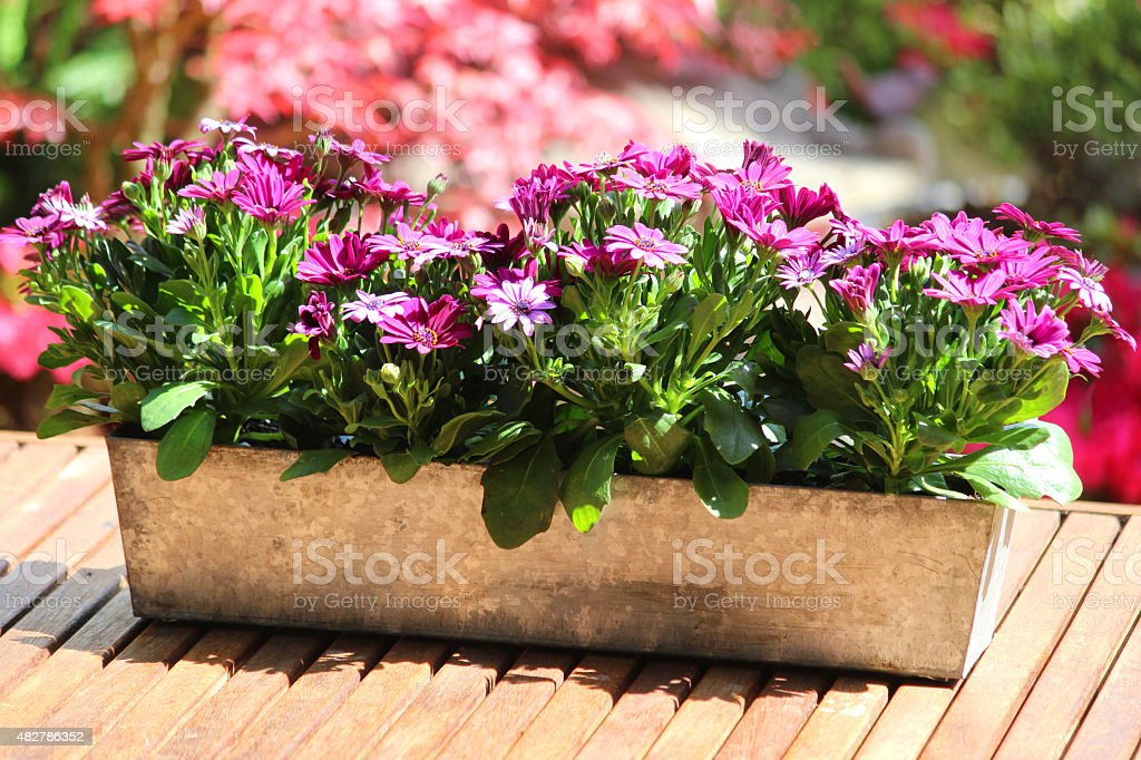 Photo showing some summer bedding that is being grown in a metal zinc...