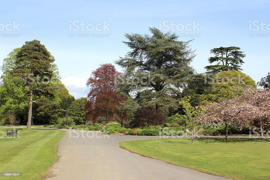 Image of summer park, with mature trees, grass and pathway stock photo