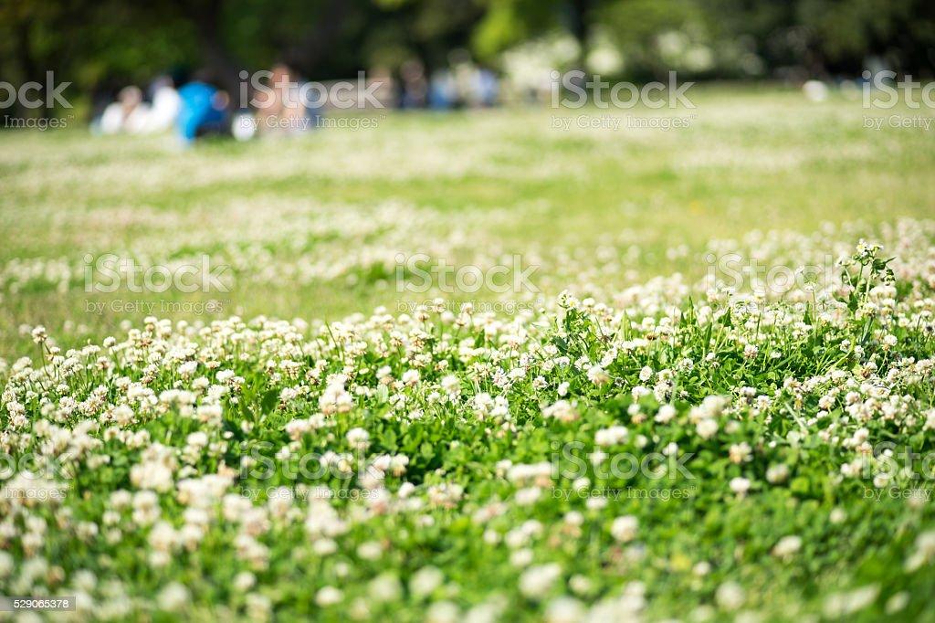 Image (il n'y a pas de pelouse, personne) du pique-nique photo libre de droits