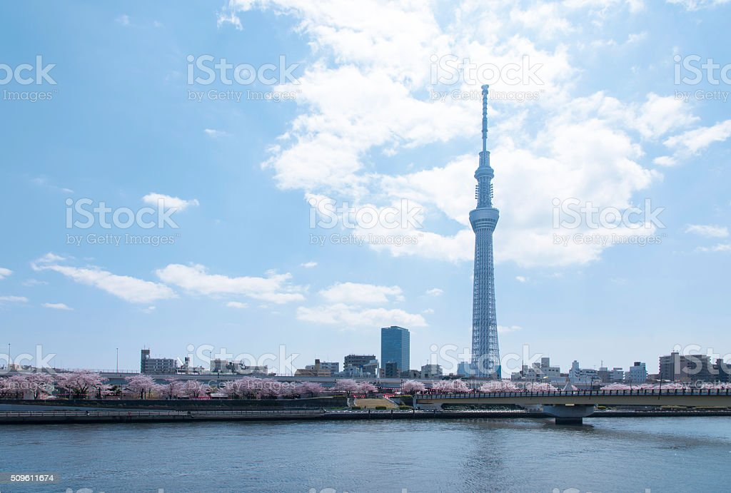 Image of the Tokyo sky tree and cherry blossom. stock photo