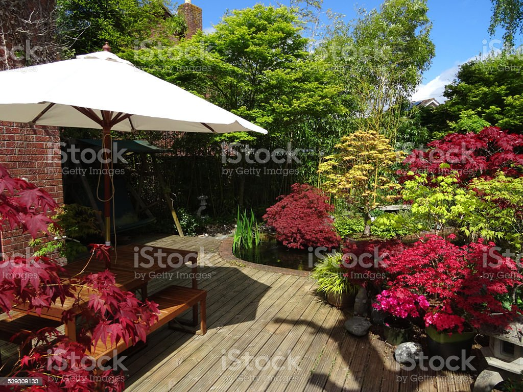 Image of timber decking in back garden, maples, azaleas, table-with-parasol stock photo