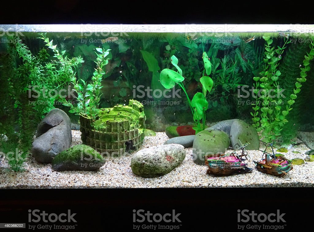 Image of tropical aquarium fish tank with snails, shipwreck, ornaments stock photo