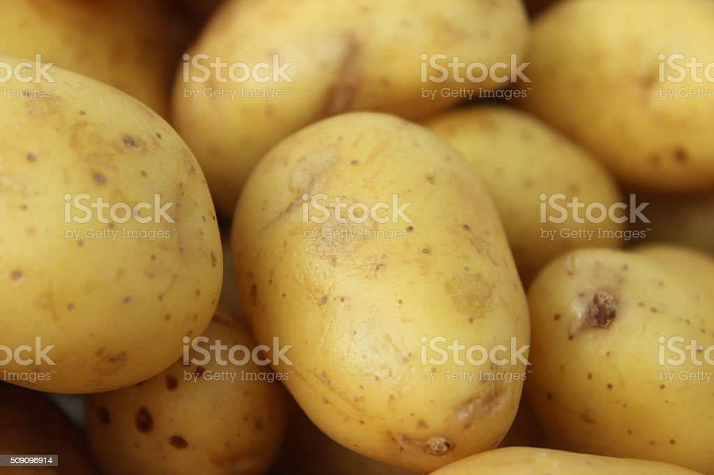 Image of washed and scrubbed heap of Belana new potatoes stock photo